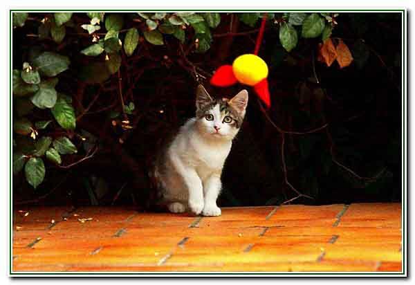 3 - le chaton joue - 2599.jpg