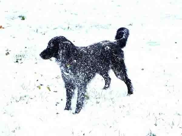 Fika dans la neige - 3007.jpg