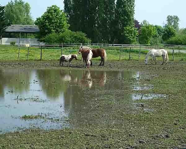 chevaux dans l'eau.jpg
