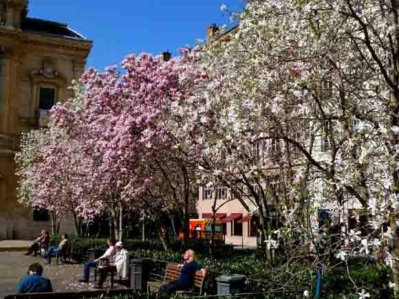 blog - magnolias - P1000537.jpg