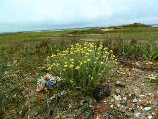 fleurs de talus - 498.jpg