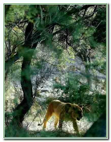 Sigean - réserve africaine2496 2 - Copie.jpg