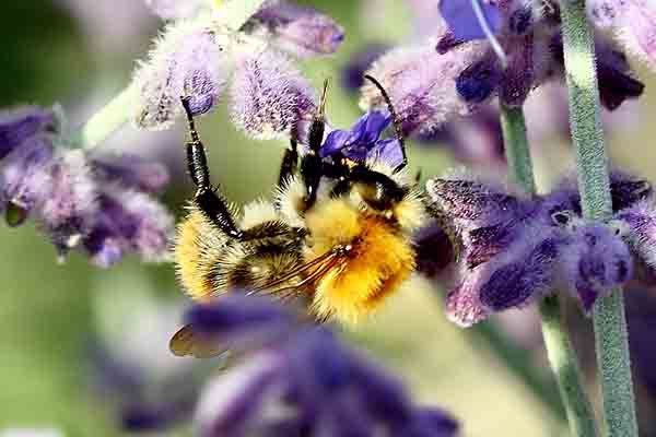 abeille_5477.jpg
