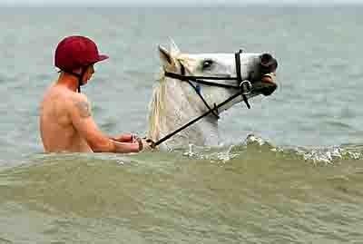 cheval et mer.jpg