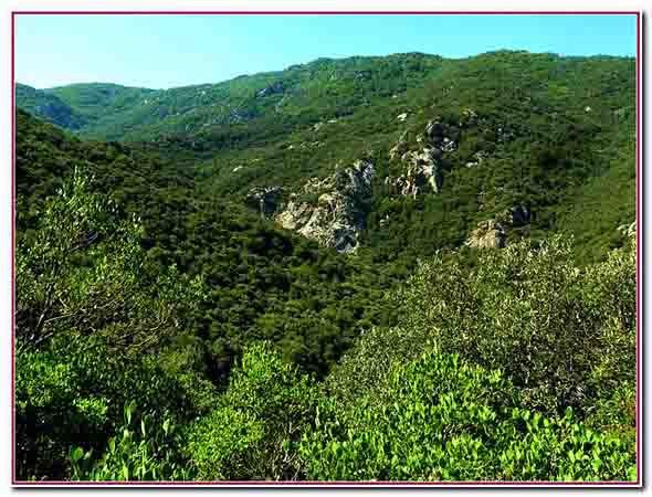e massif des Albères.jpg
